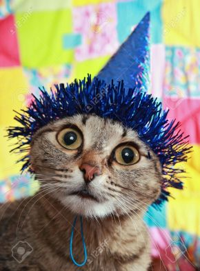 4247831-ridiculous-cat-in-a-celebratory-cap-a-panic-and-bewilderment-stock-photo