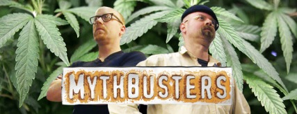 mythbusters-weed