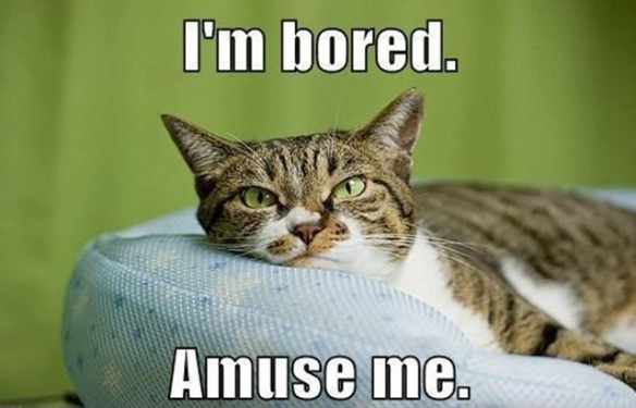 cat-says-im-bored-amuse-me