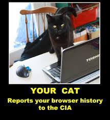 cia-cat
