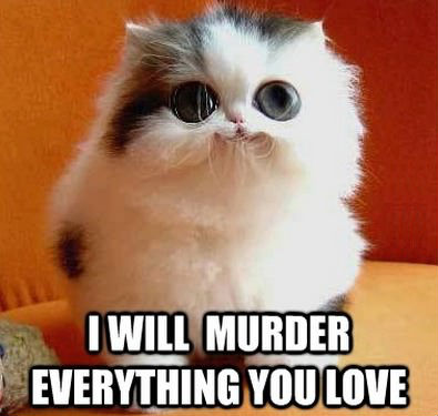 i-will-murder-everything-you-love-cat